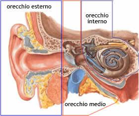 orecchio1.jpg
